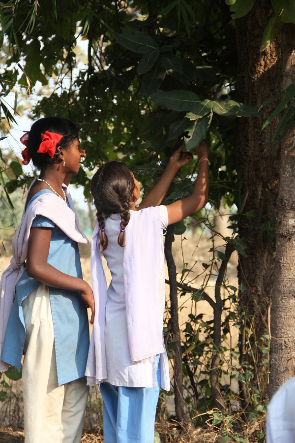 Students examining the leaves of a tree