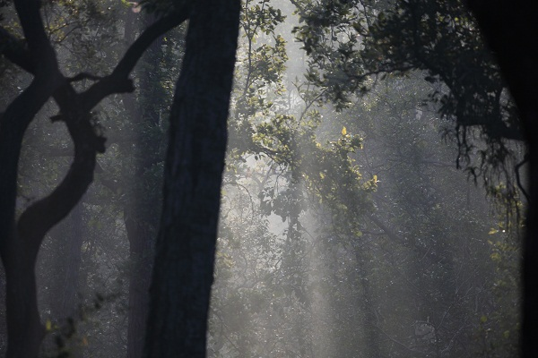 The beautiful winter light captures the enchanting nature of Pench.