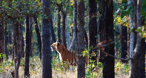 The tiger perhaps awaits Winter.