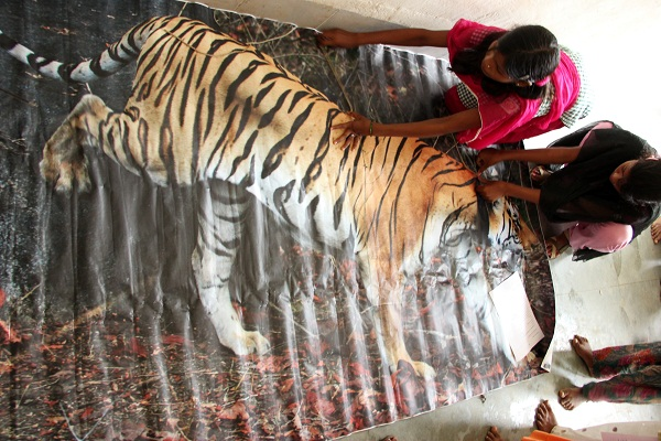 Girls at Kolitmara Residential School measuring our famous and much loved tigress, Colarwalli, to learn just how big the Bengal tigers can get!